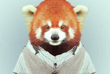 Yago Partal / Zoo Portraits