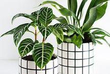 DIY : PLANTERS / Customiser des pots