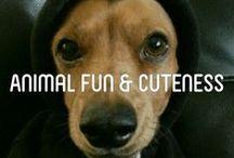 ❤~Animal Fun & Cuteness~❤ / by Marlous ❤
