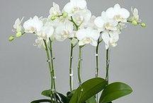 Orchidarium / Gardening / by Bernie Galang
