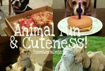 ANIMAL FUN & CUTENESS! / JOIN & PINNN!! ANIMAL FUN & CUTENESS.. NO ANIMAL ABUSE!! COMMENT TO JOIN ❤  INVITE YOUR FRIENDS ❤