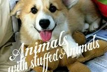 ANIMALS WITH STUFFED ANIMALS! / ANIMALS WITH STUFFED ANIMALS :-D COMMENT TO JOIN ❤ INVITE YOUR FRIENDS ❤