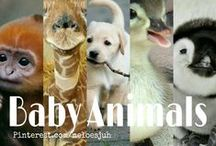 BABY ANIMALS / BABY ANIMALS ONLY! NO ANIMAL ABUSE! COMMENT TO JOIN ❤  INVITE YOUR FRIENDS ❤