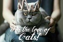 FOR THE LOVE OF CATS!❤ / CATS ONLY!! THE BOARD FOR CATS AND THEIR HOOMANS. .. NO ANIMAL ABUSE! COMMENT TO JOIN ❤ INVITE YOUR FRIENDS ❤