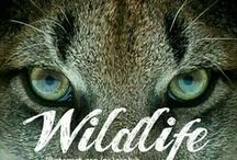 WILDLIFE... / WILDLIFE. COMMENT TO JOIN ❤ INVITE YOUR FRIENDS ❤