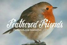 FEATHERED FRIENDS... / FEATHERED FRIENDS ❤ BIRDS. COMMENT TO JOIN ❤ INVITE YOUR FRIENDS ❤