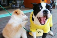 Puppy Training Tips & Tricks / Find a wealth of amazing puppy care tips & tricks here! From potty scheduling, crate training, whining, biting, jumping, barking and chewing, we've got it all! Check out  veterinaryclinic.com for even more great information! ·