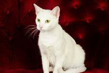 Cat Training Tips / From Kittens to your full grown kitty, you will find a myriad of training cat training tips and ideas here! Looking for house training and litter box articles? Or how about simple products for animals?