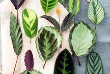 SHOPPING LIST PLANTS