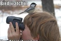 Fun with Birds