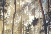 landschappen en schilderijen