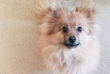 Dogs of Teatro / Did you know we are a pet-friendly hotel?