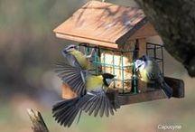 Birds feeders - Mangeoires pour les oiseaux / pour avoir des oiseaux au jardin