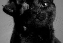 De noir vêtu - dressed in black / des animaux très foncés