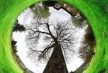 Arbre totem - symbolic tree / l'arbre porte drapeau
