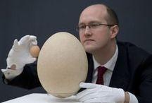 Oeufs - eggs / by Emmanuel REGENT