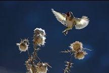 Oiseaux vus ou entendus dans mon jardin / Un jardin en bord de rivière fait pour les insectes avec des nichoirs pour accueillir mammifères et oiseaux