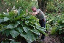 Plantes architecturales - architectural plants / Grandes plantes pour milieu frais à humide