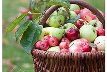 Pomme - Apple / la pomme sous toute ses formes