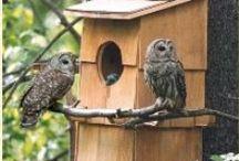 Nichoirs pour chouettes et hiboux - Owls boxes - Nistkasten für Eulen / Invitez les mangeurs de mulots au jardin