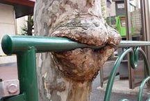 Arbres gloutons -  Hungry trees / Panneaux et autres poteaux, flis, etc. recouvert par l'écorce