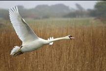 Bird Flight / Plusieurs façons de voler avec des plumes