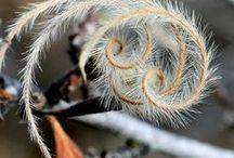 Spirales Botaniques - Botanic spirals / La croissance en spirale chez beaucoup de plante