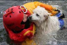 Firefighters rescue animals - Les pompiers au secour d'animaux / Une mission parfois ignorée des pompiers