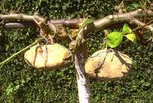 Une pierre dans mon jardin - A stone in my garden / Que faire des cailloux trouvés en jardinant...