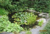 L'eau au jardin - Water in the garden - Mares - Ponds / L'eau naturelle