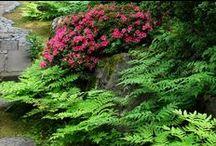 Des fougères dans mon jardin - Ferns in my garden / Les fougères sont décoratives et faciles à vivre