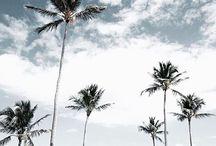 『 ocean breeze 』