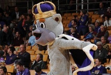 King of the Castle / J-M-UwishyouhadaDUKEDOG! Everyone's favorite purple canine.  Send us your photos with Duke Dog at socialdukes@jmu.edu. / by JMUSports