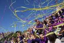 Let Your Spirit Fly! / Purple & Gold streamers show JMU spirit like no other, no matter the place.  Show us how you like your streamers at socialdukes@jmu.edu. / by JMUSports
