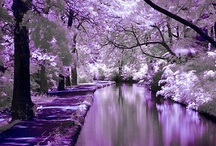 I love Purple! / by Kathy Freese