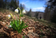 Spring / It is spring again. The earth is like a child that knows poems by heart. (Rainer Maria Rilke)