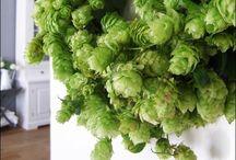Kransen / Wreaths