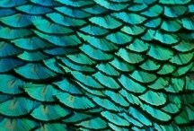 Peacocks / by Genee Brandt