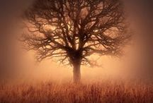 trees / by Jamie Akers