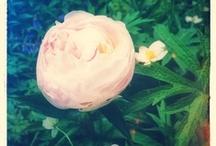 Beautiful Flowers / by Magda van der Linde