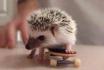~ 101 Reasons why I want a hedgehog ~ / by Chantel Perez