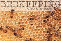 ~ Bees ~ / by Chantel Perez