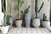 CACTUS / Succulents, air plants, drought resistant, low water gardening, native plants, dessert, no green thumb needed