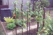 Výpěstky ze zahrady a skleníku
