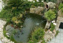 mi estanque