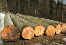 Westwood Logs / Westwood Logs