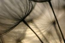 ++ Seed Pods / Seed Pods and Images of Seeds , Metaphor , Symbology and Photography Inspiration