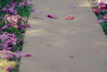 Sophie's Wedding Ideas / Decorations, colours, flowers