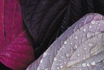 Purple / Whether you want to create serenity or make a dramatic impact - embrace the power of purple.