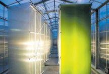 Algen –– Power für die Zukunft / Die Faszination des Urstoffs und seine Nutzung